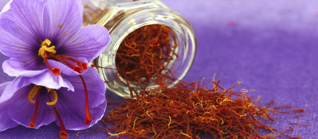 Dried saffron spice and flower